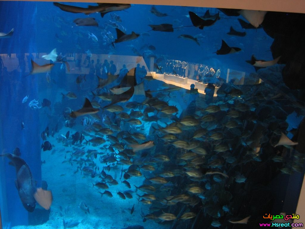 1408958679dubai-mall-acquarium.jpg
