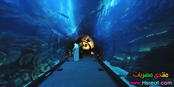 dubai-aquarium-tunnel-s.jpg